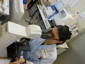 顕微鏡で標本作成をする〇山